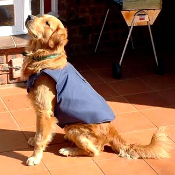 Canine Vest security products in  (South Africa)